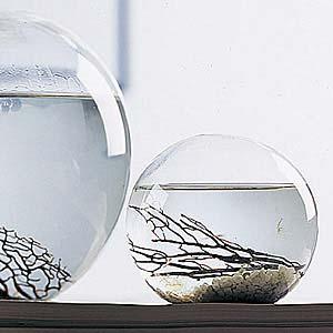 bestellseite original ecosphere das geschlossene mini aquarium mit lebenden garnelen die. Black Bedroom Furniture Sets. Home Design Ideas